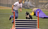 Mark Ford and his dog Karma jumping over a dog agility jump